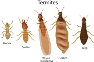 Termite Exterminator Westchester County, NY